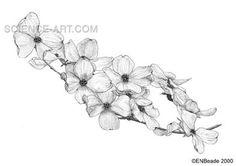 Future tattoo! Flowering Dogwood (Cornus florida)