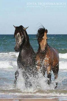 #horses…