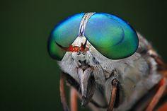 Curiosidades del reino animal: Macro-fotos: ojos de insectos
