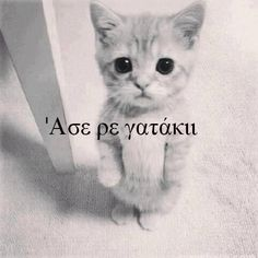 Image about love in greek quotes by Smaragdi Alefantinou Funny Animal Memes, Funny Animals, Cute Animals, Funny Memes, Jokes, Funny Greek Quotes, Sarcastic Quotes, Colors And Emotions, Love Words