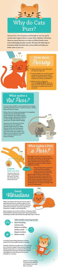 #Cats purr for a lot of reasons; and though no one can say for certain what inspires them to create these rhythmic vibrations, there are many theories as to why our feline friends create such endearingly peculiar sounds. We hope the following information helps elucidate this curious habit and helps you better cater to your cat.