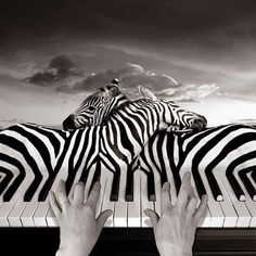 I can take a picture of an piano and using the black keys as zebra stripes