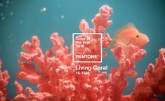 "Pantone have announced their 2019 colour of the year and it's a vibrant Living Coral! Pantone describes Living Coral as ""an animating and life-affirming coral hue with a golden undertone that energizes and enlivens with a softer edge. Yoga Studio Design, Coral Pantone, Pantone Color, Color Trends, Design Trends, Web Design, Design Ideas, Brand Design, Modern Design"