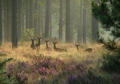 Deer herd in the forest