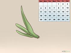 Aloe Vera vermehren und pflegen