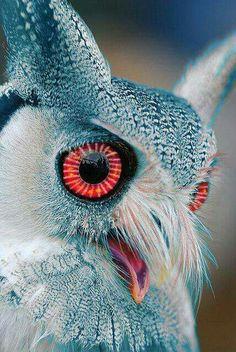 Red eyes long ears