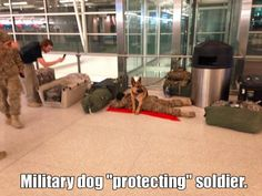"Military dog ""protecting"" soldier."