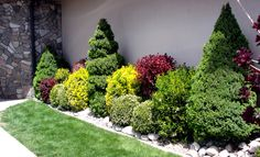 Next to it is a Crimson Barberry, Near the center are two Potentilla shrubs, and another one near the front at the left end. Description from johnsongarden.blogspot.com. I searched for this on bing.com/images