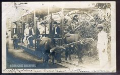 HORMIGUEROS, Puerto Rico. Oxen drawn trolley - Mailed from Ponce NOV 18, 1906. Phipps, Photo Group 1.