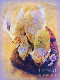 Oyster Shell Quartet by Shelly Weingart