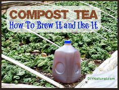 What is compost tea, how do you make it, and what are its benefits? Learn all about this wonderful fertilizer you can brew from your recycled food scraps!