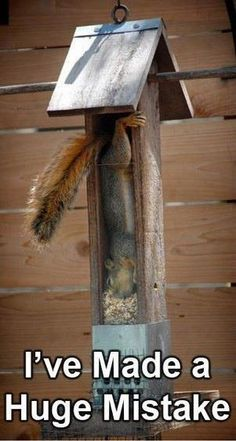 I'd get one of those bird feeders if they caught squirrels like that!