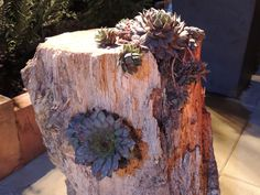 Succulent stump at the Home and Garden show in Portland, Or 022113 Log Planter, Planters, Lawn And Garden, Home And Garden, Herb Recipes, Garden Show, Hens And Chicks, Cacti, House Plants
