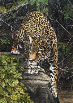 Yaguarete, Jaguar by salinasj.deviantart.com on @deviantART