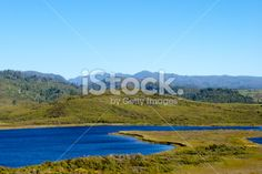 Mangarakau Swamp, Golden Bay,NZ Royalty Free Stock Photo New Zealand Landscape, Image Now, Wilderness, National Parks, Landscapes, Scenery, Royalty Free Stock Photos, Pure Products, Heart
