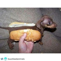 Fits in a hot dog bun