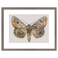 """Framed Watercolor Butterfly 14""""x11"""" - Threshold™ : Target"""