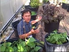 Container Gardening, Sprouting & More at Hippocrates Health Institute Growing Wheat Grass, Help The Environment, Organic Gardening, Container Gardening, Sprouts, Saving Money, Healthy Living, Health Fitness, Ark