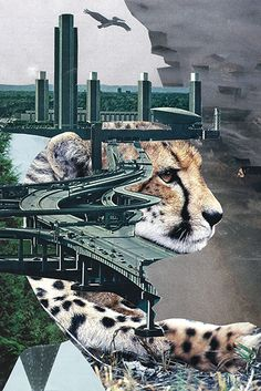 Urban Wild 2013 Morgaen Muñoz cut paper collage