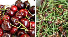 Hrean, ghimbir si lamaie: elixirul fabulos care topeste grasimea abdominala in doar 3 saptamani - Frunza Verde Cherry, Health, Home, Green, Tips And Tricks, Knowledge, Health Care, Prunus, Salud