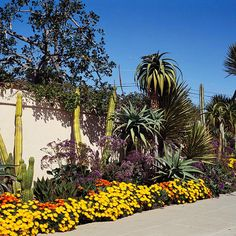 You can have a stunning sidewalk, even if you live in an arid area: http://www.bhg.com/gardening/landscaping-projects/landscape-basics/sidewalk-garden-front-yard/?socsrc=bhgpin021714gardennomatterwhereyoulive&page=10