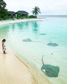 Jumeirah Vittaveli #Maldives.....whenever I see stingrays, I can't help but think of Steve Irwin & his death-by-stingray-barb.....so no thanks. Best Vacations, The Maldives, Maldives Honeymoon, Maldives Resort, Maldives Travel, Maldives Islands, Wonders Of The World, Travel Destinations, Travel Trip