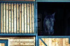 Gracious Horses by Tyler89.deviantart.com on @deviantART