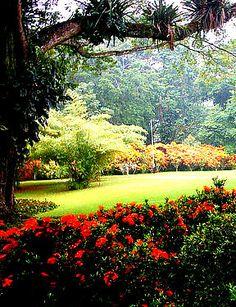 Parque de La Exótica Flora Tropical en Yaracuy uno de los parques más grandes y bellos de América Latina. Como su nombre lo indica, está dedicado a mostrar 250 especies diferentes de plantas tropicales, de todas partes del mundo. Venezuela