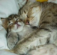 5 Adorable pets with their mothers The Pet's Planet