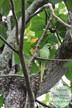 Voyages et Expériences à l'île Maurice: Oiseaux de l'île Maurice