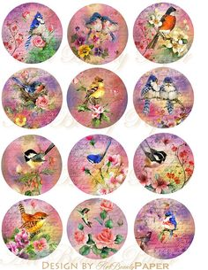 Colors of Bird circles big size in 2.5 inches circles for jewelry making on Digital collage sheet , Printable Instant Download