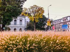 Idei Urbane | București, la câmpie