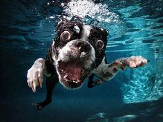 WHAT DOES YOUR DREAM BUSINESS LOOK LIKE?  At last a genuine Business in a Box Solution that can make anyone $3-$5K in 30 days!  Find Out More Here - www.GarysOnlineBiz.com  Picture: Seth Casteel, Underwater Dogs
