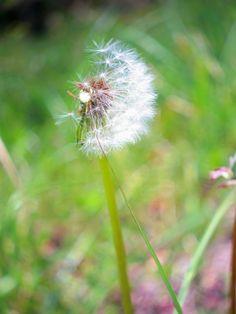 PENTAX Q - もうひと吹き -  植物  シネレンズ  - Camera Talk -