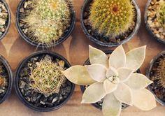 Bom dia! Ontem foi dia de feira e encontrar essas belezuras por lá. :) #suculovers #cactus #suculentas