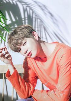 Daniel Wanna One Jinyoung, Daniel K, Prince Daniel, Kim Jaehwan, Ha Sungwoon, Produce 101, Seong, 3 In One, Handsome Boys