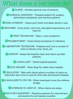 What Does a Vet Tech Do?