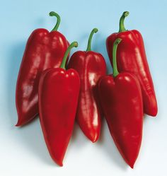 Plant Belcanto Organic Pepper Seeds in your organic vegetable garden. Learn when to plant pepper seeds from our How to Grow Peppers instructions.