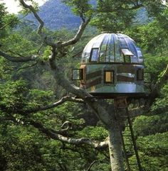 tree house.. new and improved!