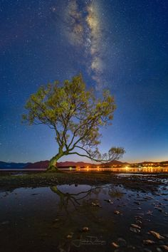That tree -