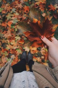 Crisp autumn leaves - autumn lovin'