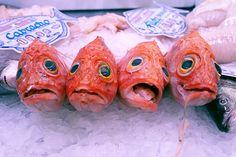 fish-spanish
