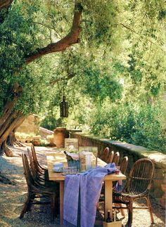Dining under an olive tree