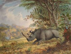 Thomas Baines - The Black Rhinoceros