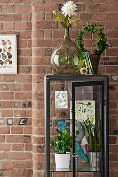 Pohľad na vitrínu FABRIKOR v tmavosivom prevedení, vnútri sú črepníkové rastliny a obrázky s botanickými motívmi. Pozadie tvorí stena s obnaženou tehlou.