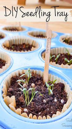 Raised Vegetable Gardens, Herb Gardening, Container Gardening, Garden Seeds, Planting Seeds, Planting Flowers, Recipe Girl, Growing Herbs, Upcycled Crafts