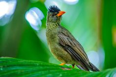 Bird of Praslin - Seychelles by oagostinho Praslin Seychelles, Seychelles Islands, Africa Travel, Mauritius, Madagascar, Paradise, Birds, Live, Style