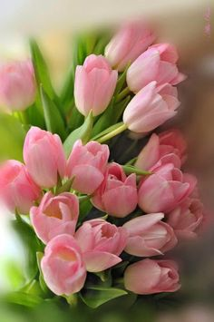 Hottest Totally Free Funeral Flowers tulips Strategies Whether you are planning as well as going to, funerals will always be your somber and occasionally tense occas. Pink Tulips, Tulips Flowers, Exotic Flowers, Amazing Flowers, Beautiful Roses, Fresh Flowers, Spring Flowers, Planting Flowers, Beautiful Flowers