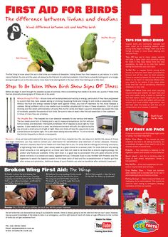 A helpful guide to First Aid for Birds. Watch the YouTube video for more information: http://www.youtube.com/watch?v=KRMCpym2PHY  #Vetafacts