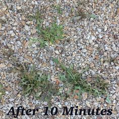 Mommy's Obsessions: 3 Ingredient Homemade Weed Killer Recipe